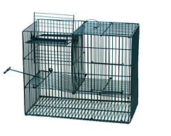 Bird-trap multicatch /5034