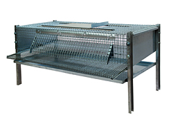 Cage for laying quails /5036